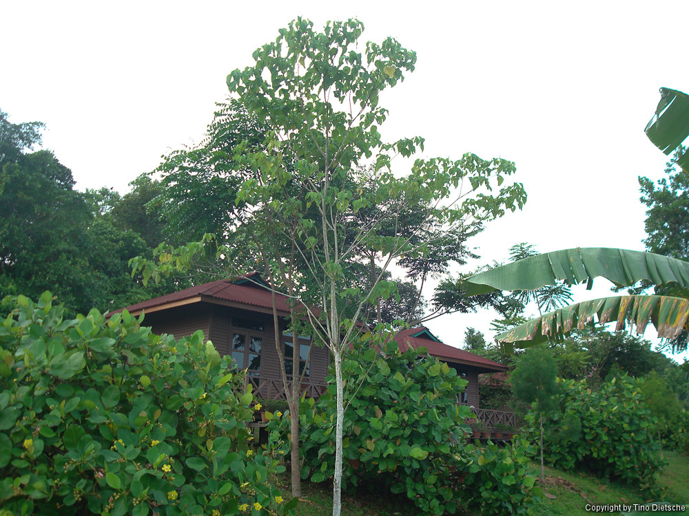 -08_Borneo.jpg