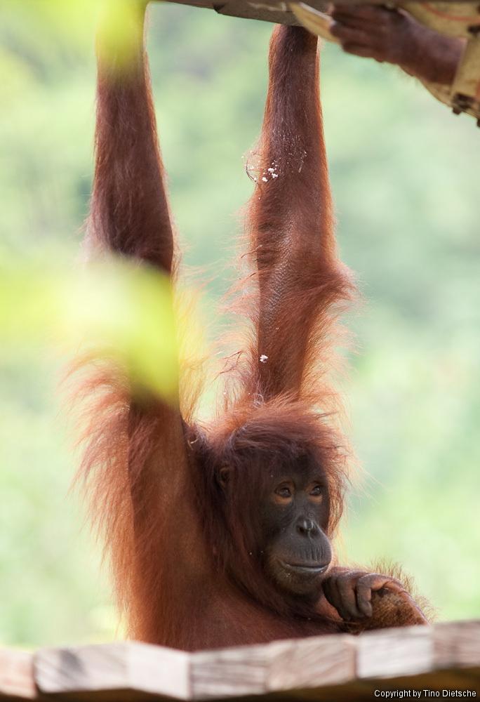 -20_Borneo.jpg