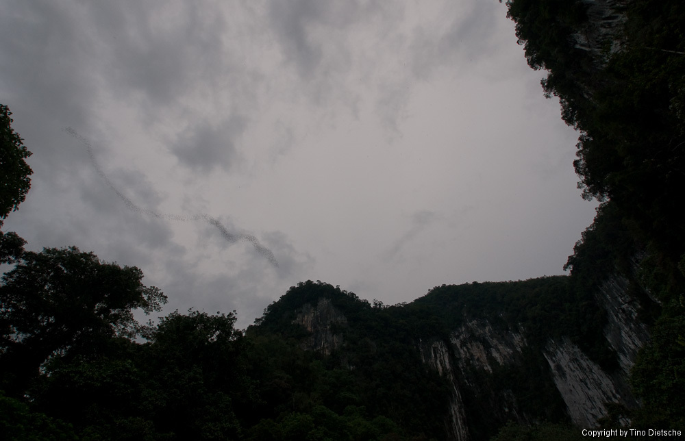 -51_Borneo.jpg