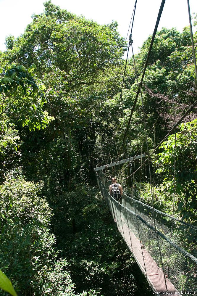 -61_Borneo.jpg