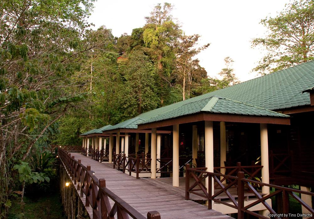 -74_Borneo.jpg