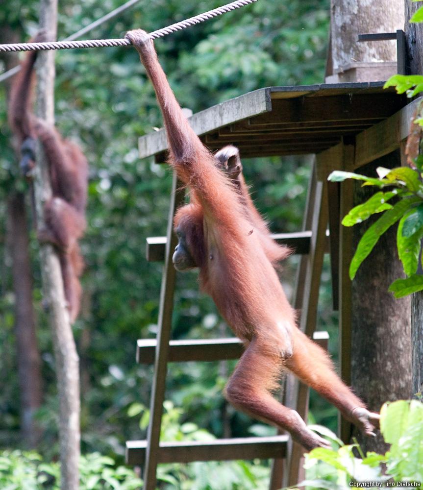 -89_Borneo.jpg