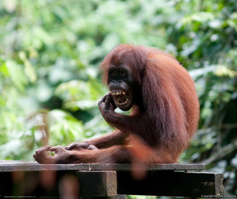 -90_Borneo.jpg