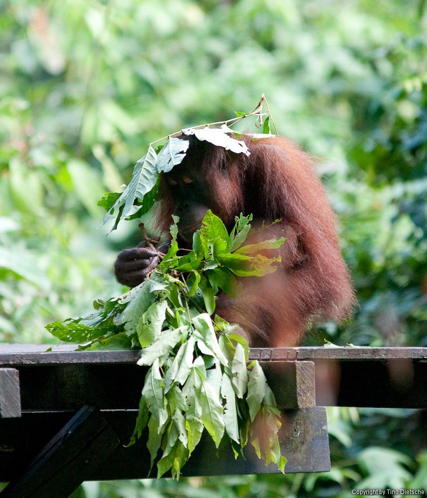 -91_Borneo.jpg