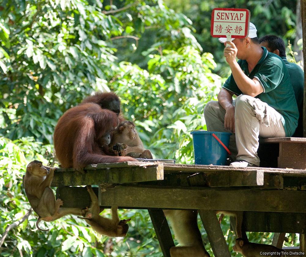 -92_Borneo.jpg