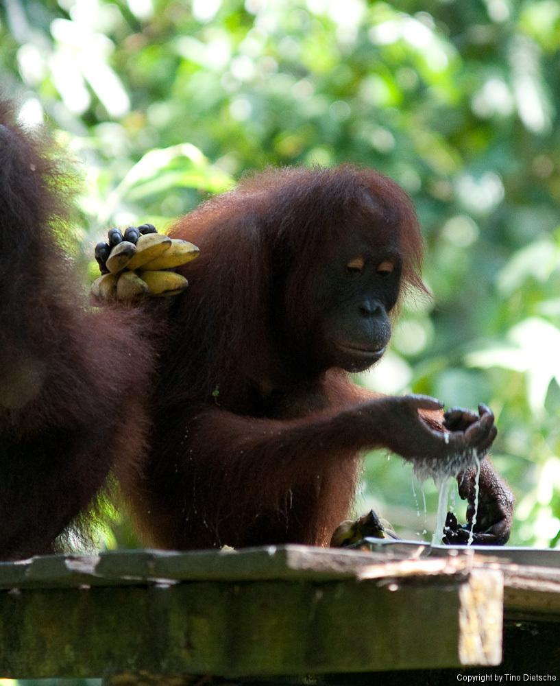-94_Borneo.jpg
