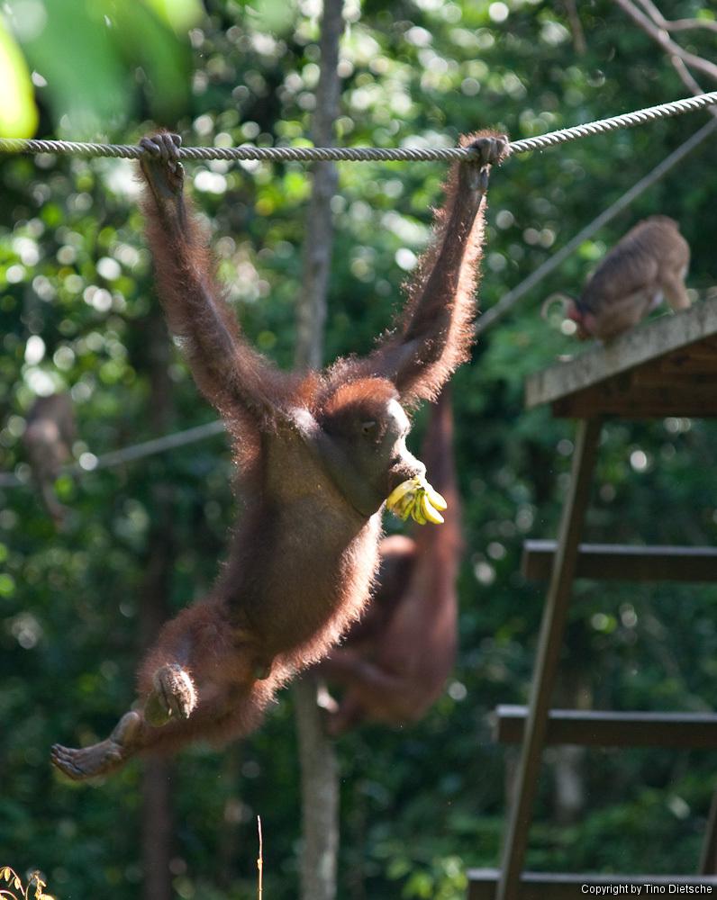 -95_Borneo.jpg